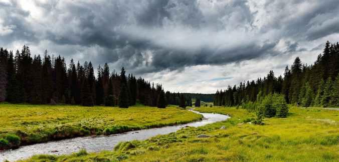 conifer countryside dark clouds dawn